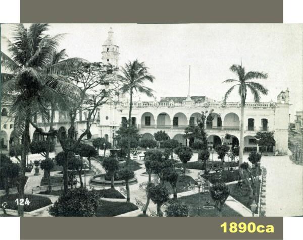 La palmera ya en su etapa adulta, en esta fotografía tomada alrededor de 1890. Fuente de foto: Cornell University Library.