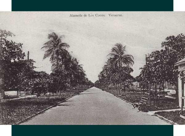 Núm. 21.- Paseo de los Cocos en la avenida de la Libertad (hoy, av. Díaz Mirón). Principios de la década de 1910. Editada por la Papelería Blanco y Negro.